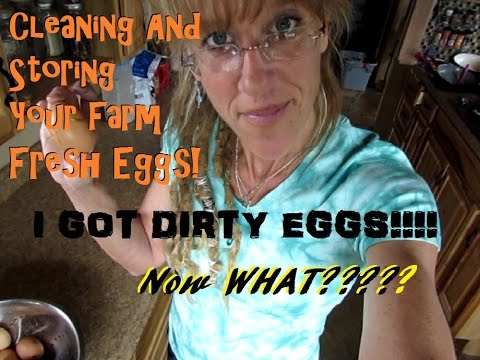 I GOT DIRTY EGGS! NOW WHAT? Storing & Cleaning Farm Fresh Eggs