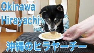 ???? ???? ????????? Shiba Inu Kuro Eats Hirayachi