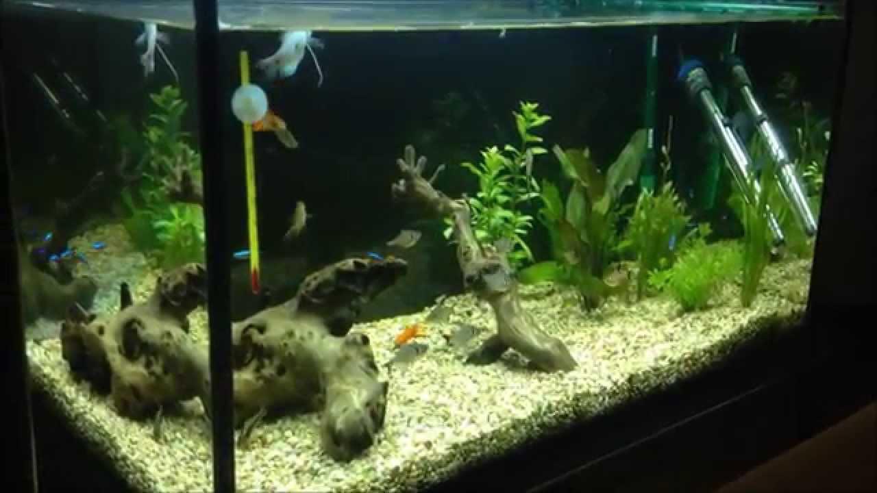 Peces tropicales acuario comunitario youtube for Acuario comunitario