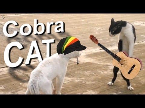COBRA CAT - PAROLE DE CHAT