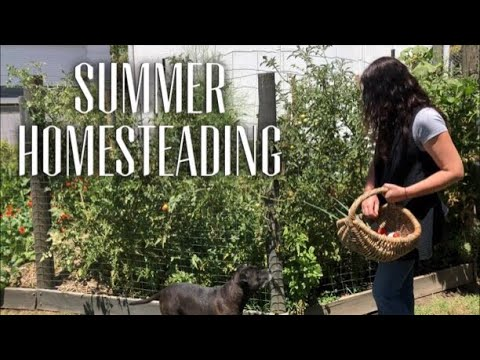 HOMESTEADING - SUMMER FOOD GROWING - Appreciate The Season You're In