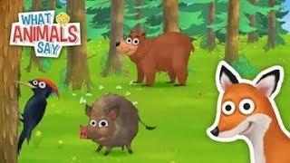 Обучающие видео для детей. Английский. Как говорят животные. Звуки животных.
