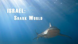 SHARKS in ISRAEL