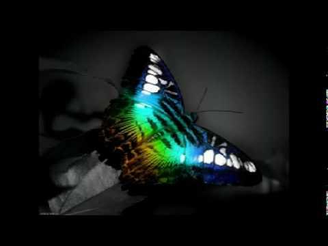 Bushido - Schmetterling (Instrumental)
