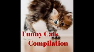 """Funny Cat Compilation"" 