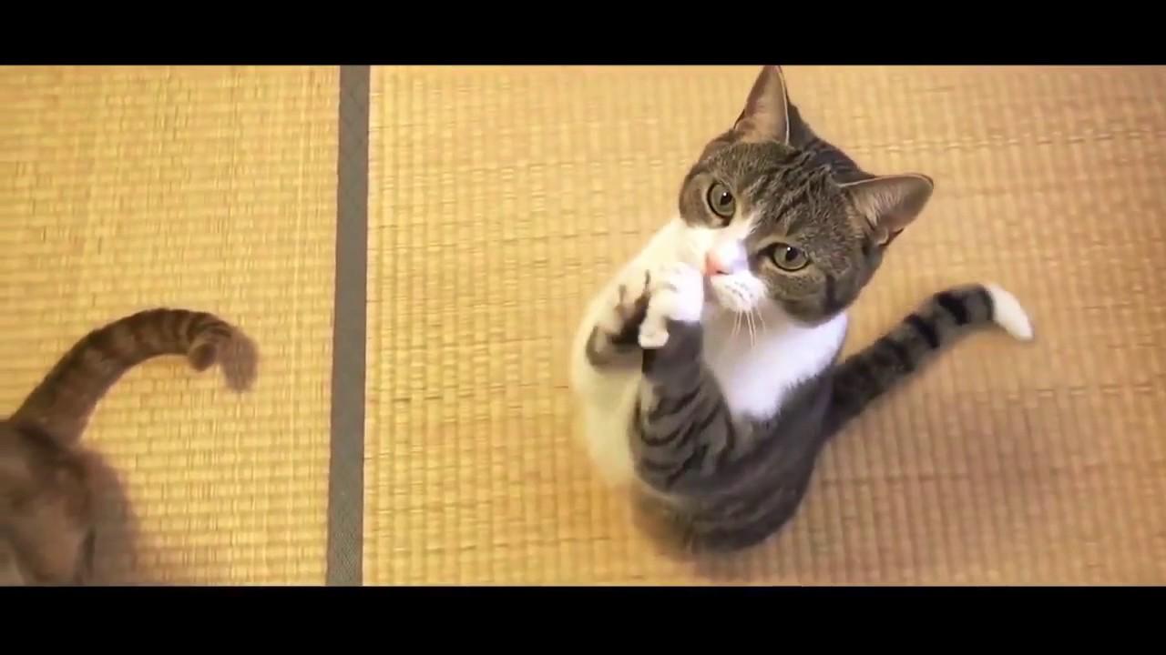 Видео коты угар
