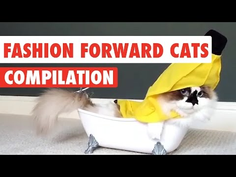 Fashion Forward Cats | Funny Pet Kitten Video Compilation 2017
