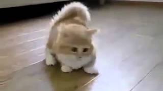 Котенок с короткими лапами Funny Cat Game