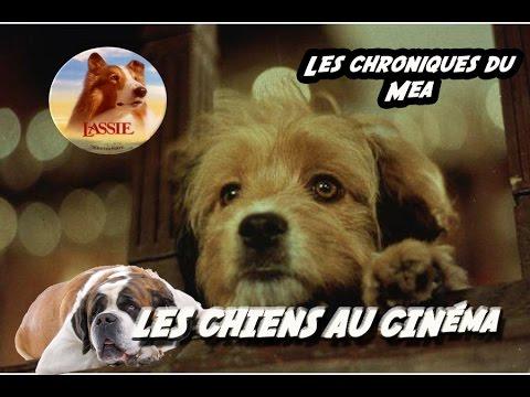 Les Chiens Célèbres du Cinéma - Les Chroniques du Mea