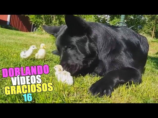 DOBLANDO VÍDEOS GRACIOSOS 16