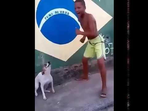 Dog dancing with boy