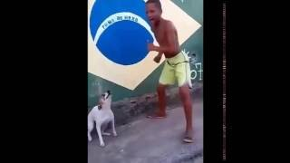 Dog dancing with boy