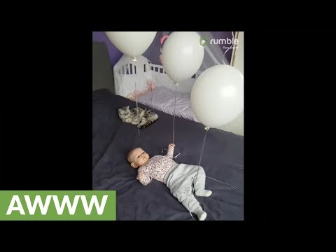 Cat and baby both have fun playing with balloons