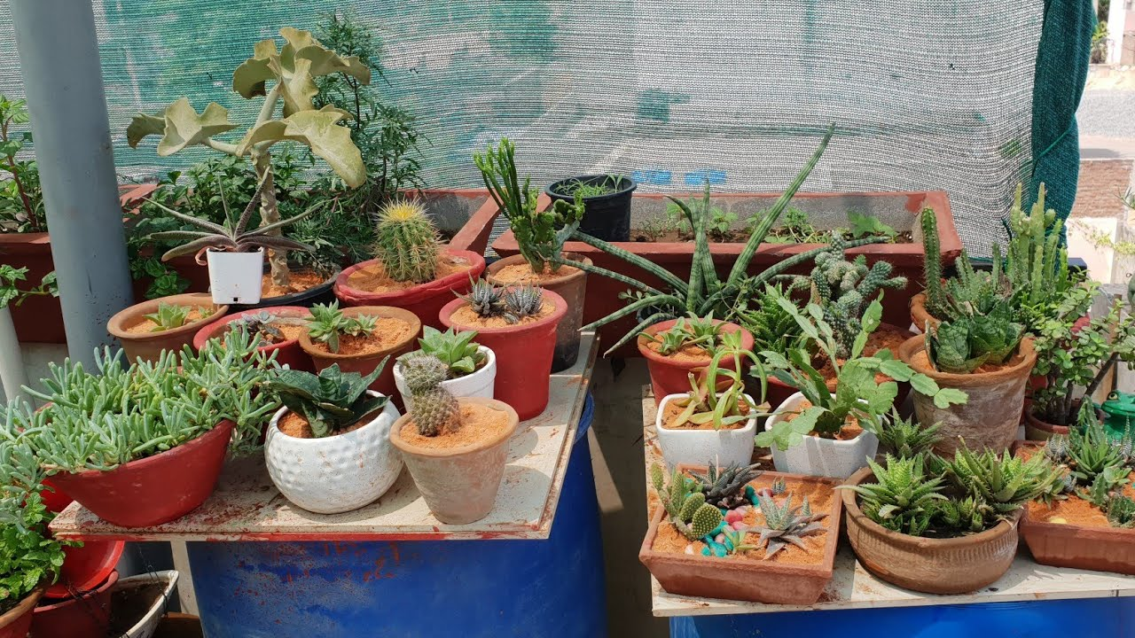 Care Of Succulents In Summer How To Grow And Care Succulents In