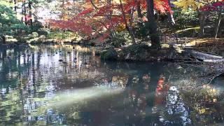 20141121 新潟県新発田市の清水園、紅葉を楽しむ