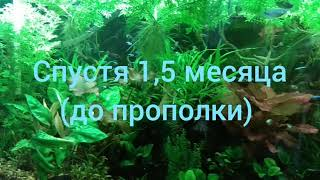 CO² в аквариуме и что стало с индийским папоротником