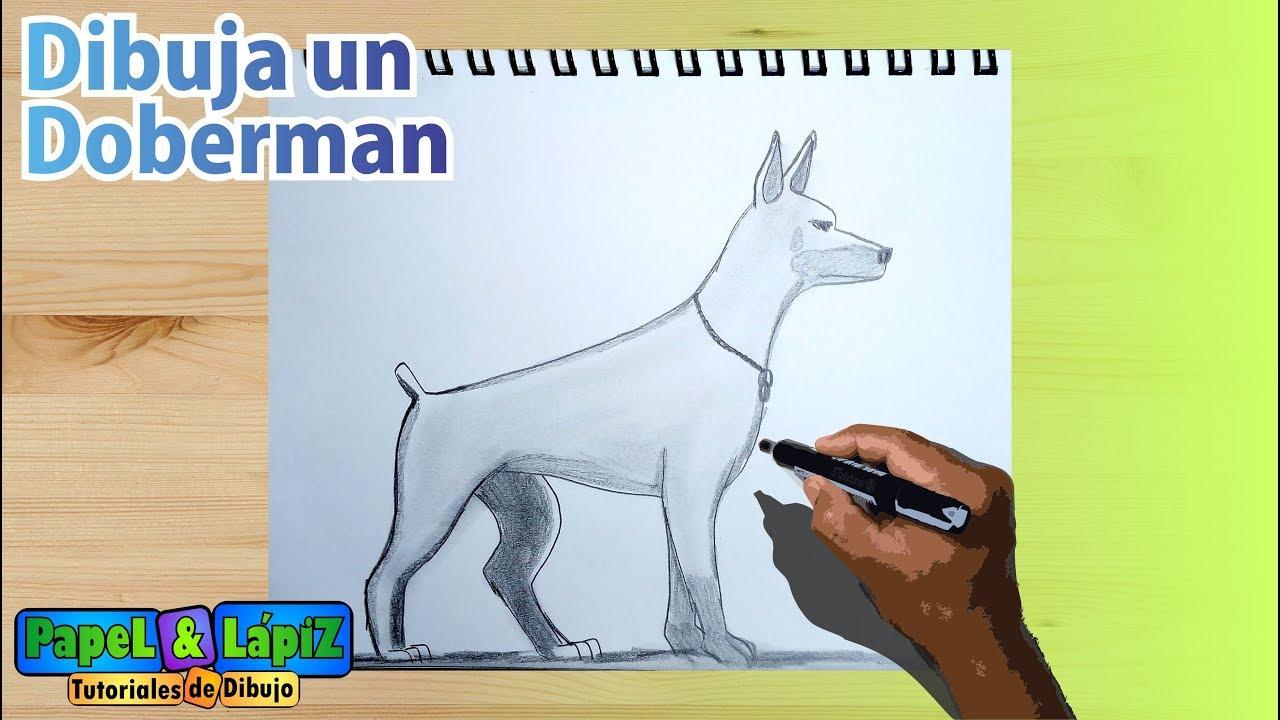 Aprende A Dibujar Un Perro Doberman