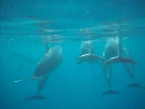 dolphin poops right in my face in hawaii youtube