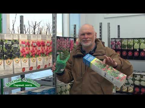 Вопрос: Какие есть сорта брусники для выращивания в саду?