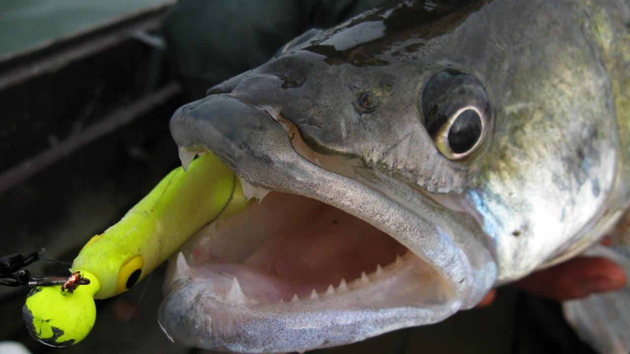 Téli gumihalas süllőzés a Dunán