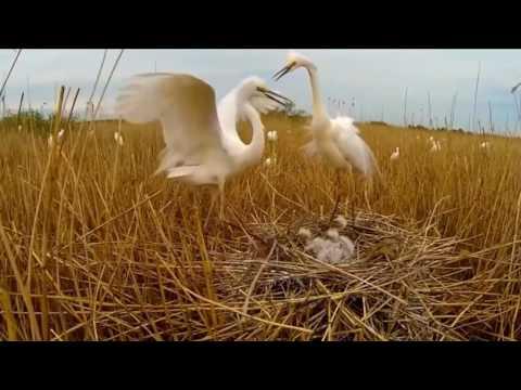 Рослана-Облако любви