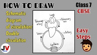 Download 27+ Draw A Schematic Diagram Of Double ...