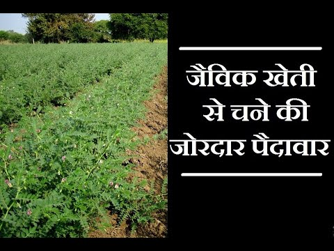 Results of Organic Products on Gram or Bengal Gram Crop