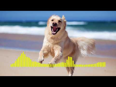Dog Barking - Ringtone Mp3