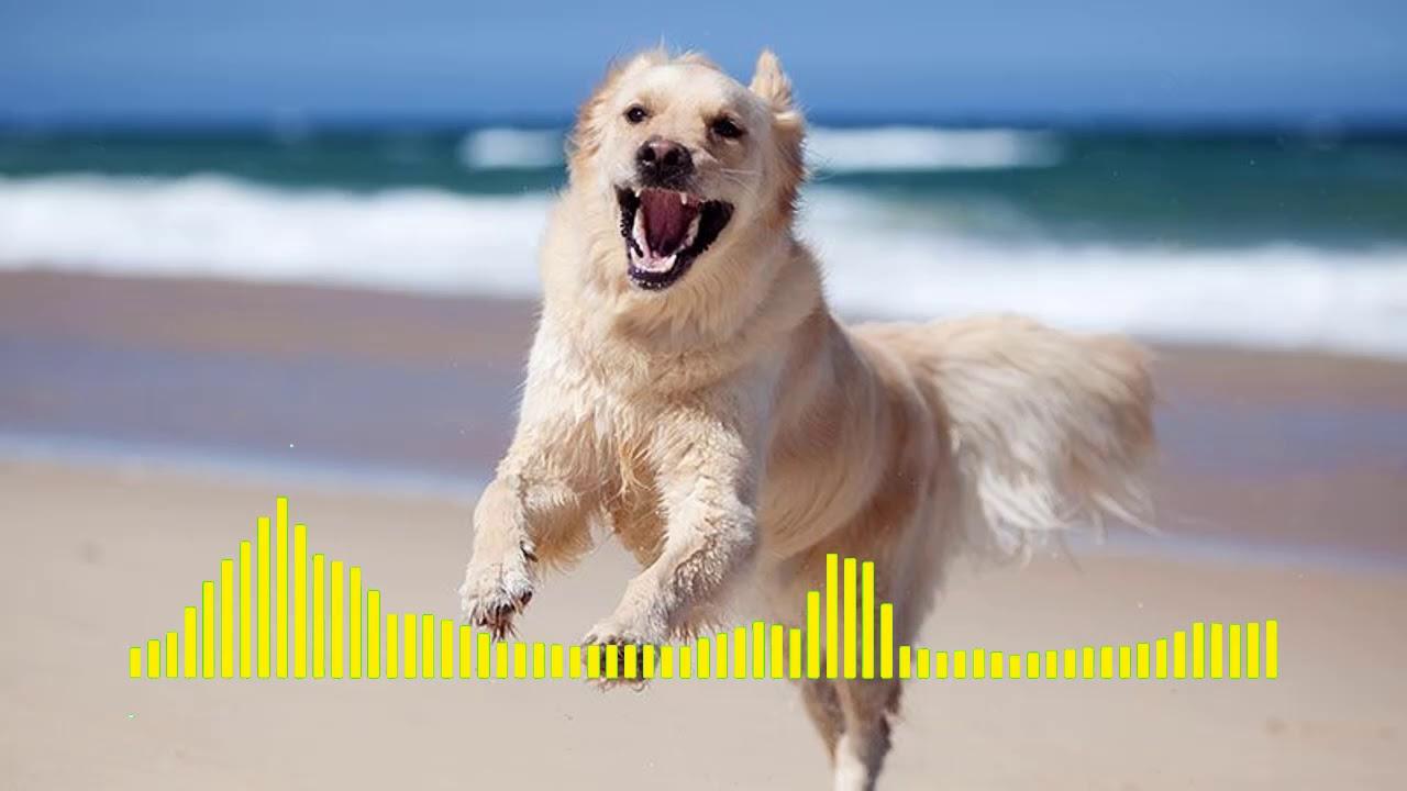 dog barking ringtone download
