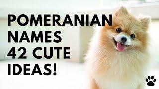 Pomeranian Dog Names +42 CUTE & TOP Ideas   Names