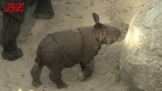 Panzernashorn-Nachwuchs im Tierpark Berlin heißt Karl