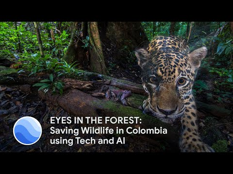 EYES IN THE FOREST:  Saving Wildlife in Colombia Using Camera Traps and AI