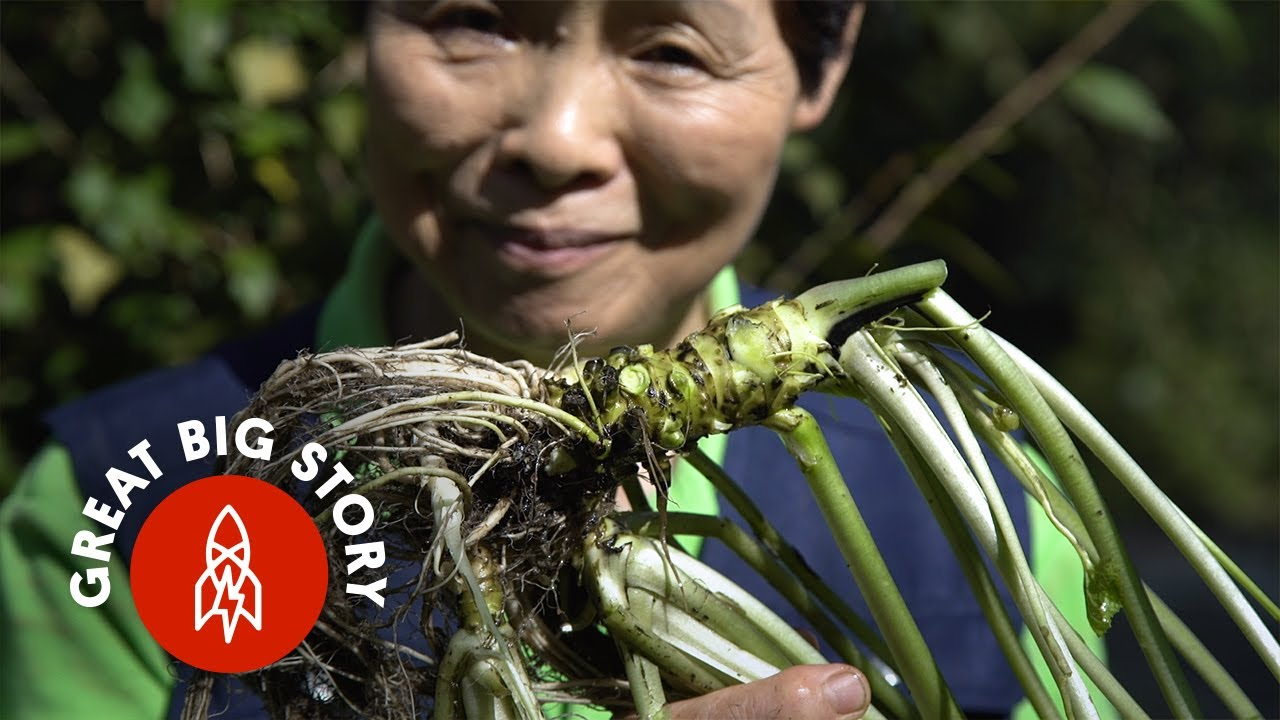 The Wasabi You Eat Probably Isn't Wasabi