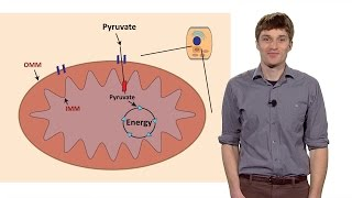 John Schell (U. Utah): Getting Fuel to the Cell's Engine: The Importance of Metabolism in Disease