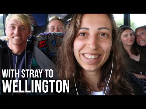 Going To Wellington With Stray    New Zealand