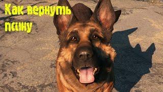 Fallout 4 - Потерялась Псина, как найти