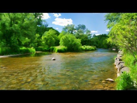 Credit River Erindale Park Postcard, Mississauga Canada