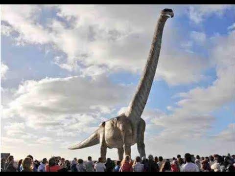 """Patagotitan mayorum"" New study describes the biggest dinosaur ever"