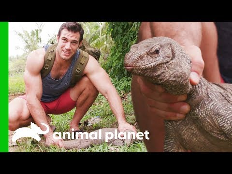 Water Monitor Lizard Needs a Dental Checkup | Evan Goes Wild: Passion and Purpose