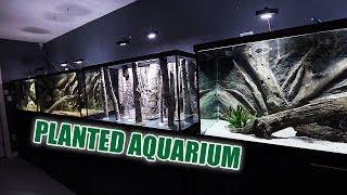 the-new-planted-aquarium-1