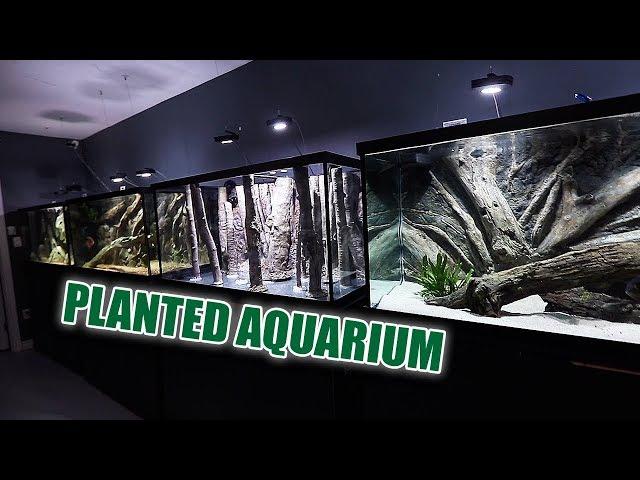 The NEW planted aquarium - 1