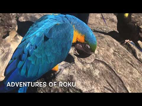 Hiking with Parrots Part 2 of 2