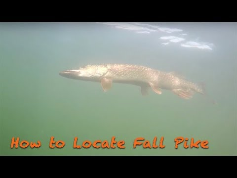 How To Locate Fall Pike/Fishing Tactics