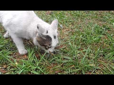 猫にいさんの『ニャ~tube』~川崎「ゴージャス」①。