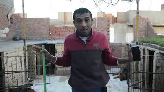 الكلب بتاعه بيعوى وقت الاذان وعمله مشكله مع الجيران / الكلب اكل كيس ولف على مصرانه