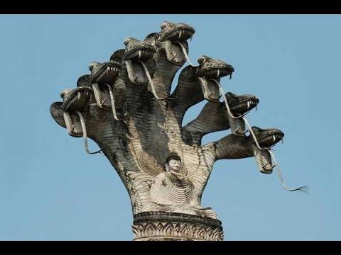 Những chuyện thần bí về loài rắn 5 đầu trên thế giới, Cực hay