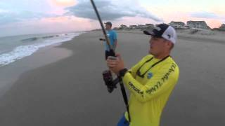 """Cobia surprise!"" Shark Fishing in the Outer Banks North Carolina"