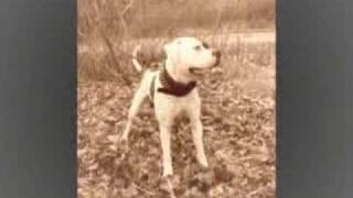 American Bulldog Grip