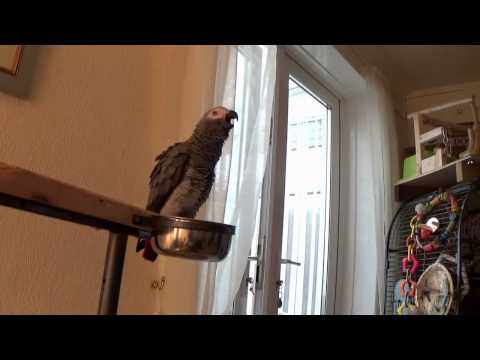 griffin the parrot