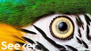 How Eyes Evolved to See the World Differently